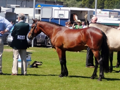 Petra - Omagh Show 2012