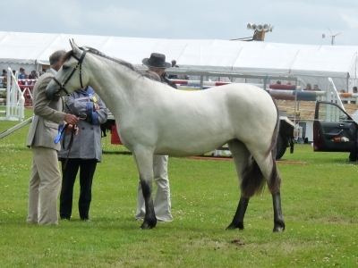 Poppy - Omagh Show 2010
