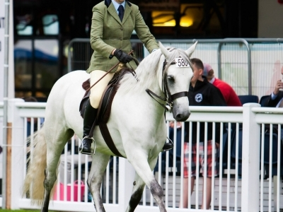Poppy - Dublin Horse Show 2013 (Photo by Keith Jack)