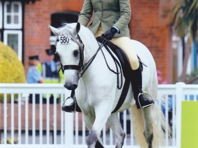 Poppy - Dublin Horse Show 2013