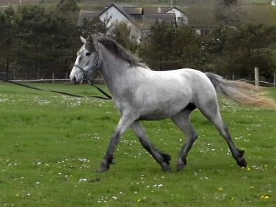 Blue on the lunge