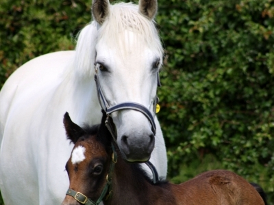 Poppy and her first foal bailey